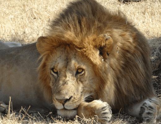 How to plan a trip to the Masai Mara for less than $500.