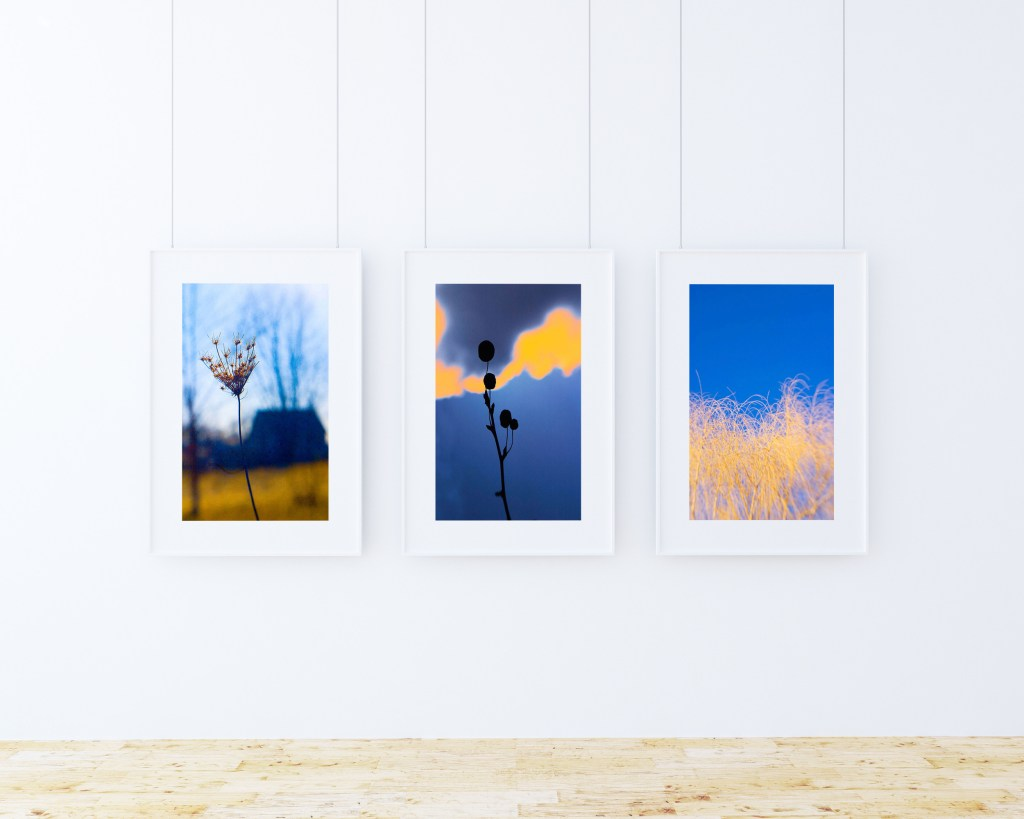 Ken Shung photography - image of a triptych from the 'Flora Series' of color prints - theme color blue