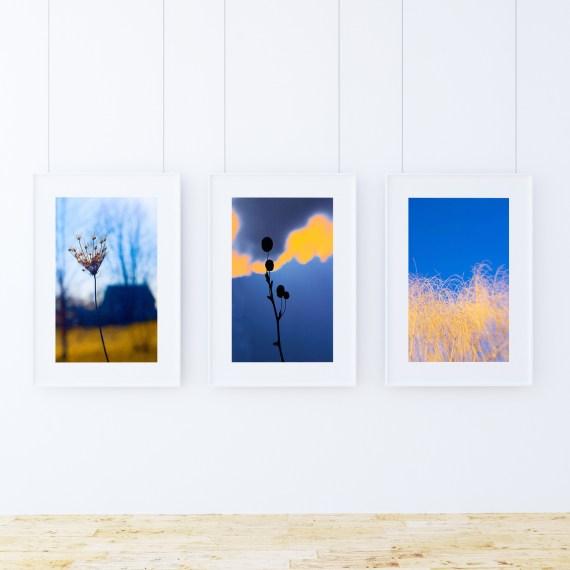 @Ken Shung - Flora Series. Color triptych - #7, #8, & #3 - blue
