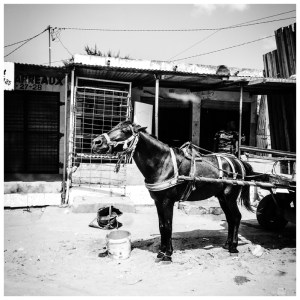 'Horse & Cart' Gambia © Helen Jones-Florio black & white