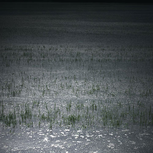 Rice Field III - Diasec-mounted C-type, 100cm x 100cm