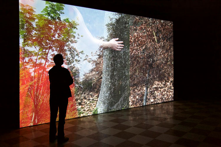 Company of Trees : Video Installation, Santa Maria Ausilliatrice, 2015