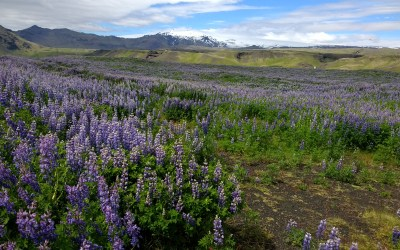 Iceland by the seasons: and why you need a travel planner for each