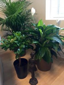 Grønne planter og potter plassert i gruppe.