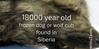 18000 year old puppy