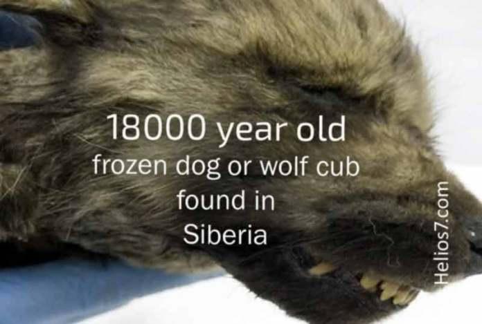 18000 year old puppy