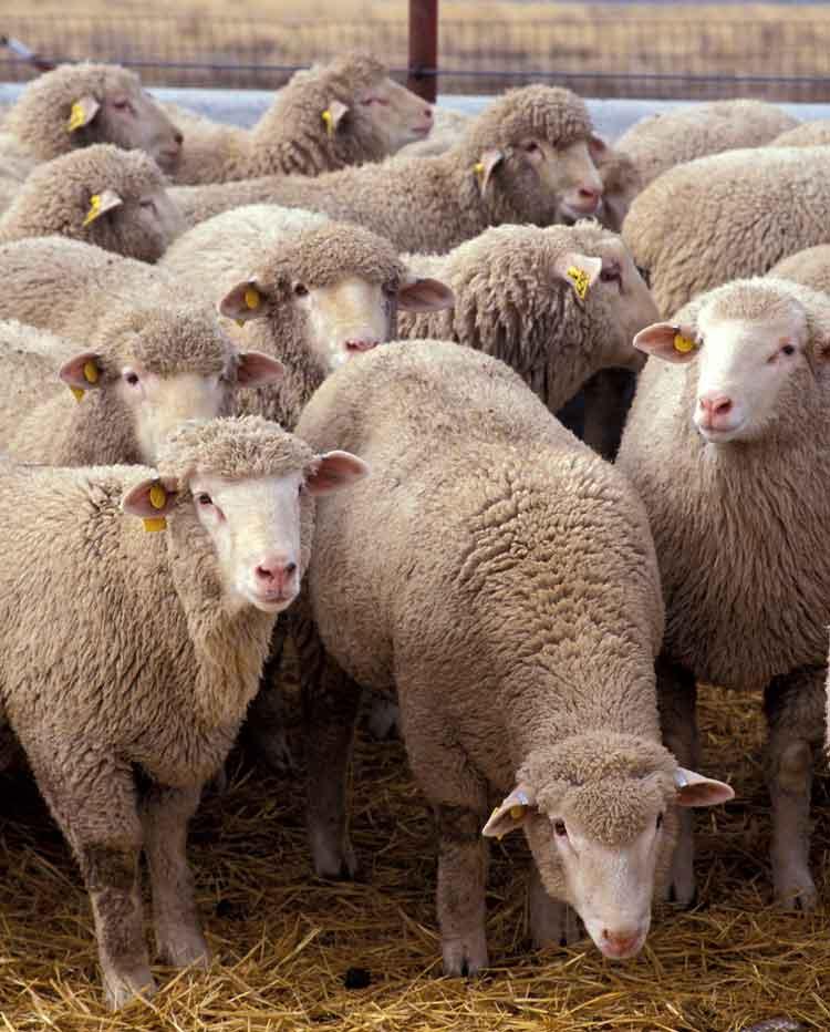 πολίτες-προβατα