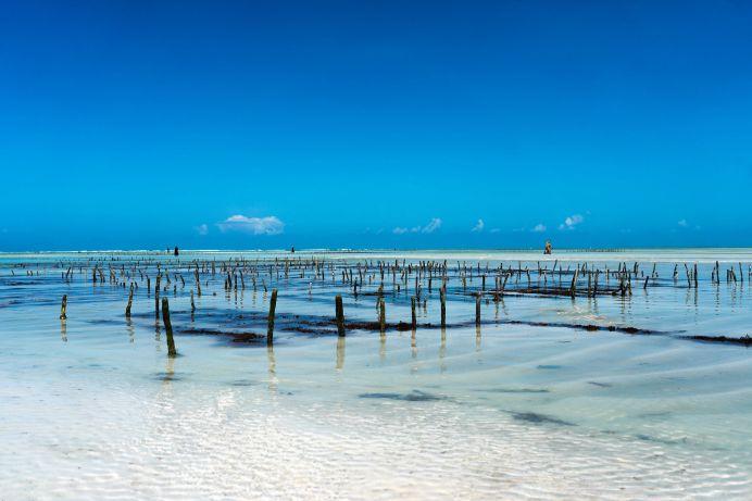 Seegrasanbau in Sansibar bei strahlendem Himmel