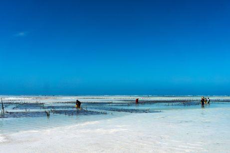Seegrasanbau auf Sansibar am Meer