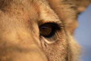 About Lionsrock