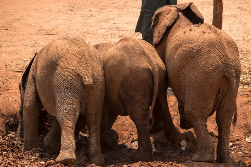 Lilayi Elephant Nursery
