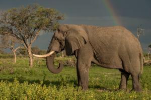 Wunderschöne Begegnung mit einem Elefanten
