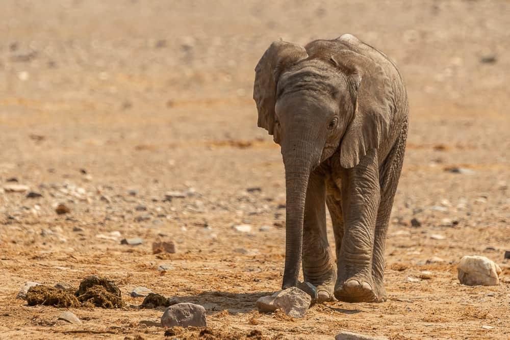 Auch Baby-Elefanten lieben Toyota ☺️