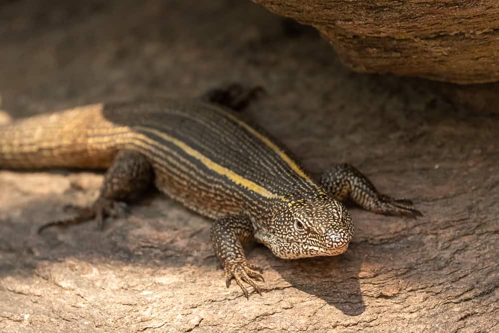 Wildlife in Siavonga :-)