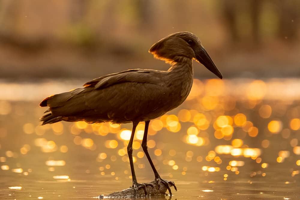 Birding am Wasserloch