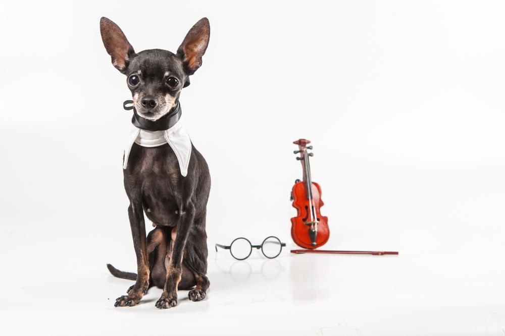 Bark like a viola