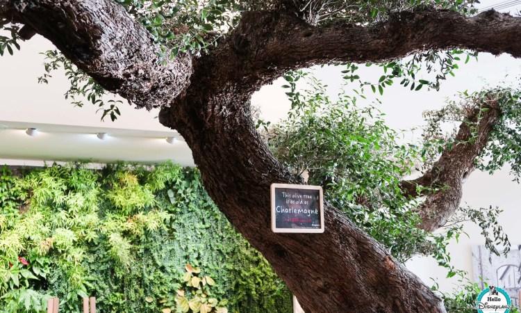 Vapiano Restaurant - Disneyland Paris