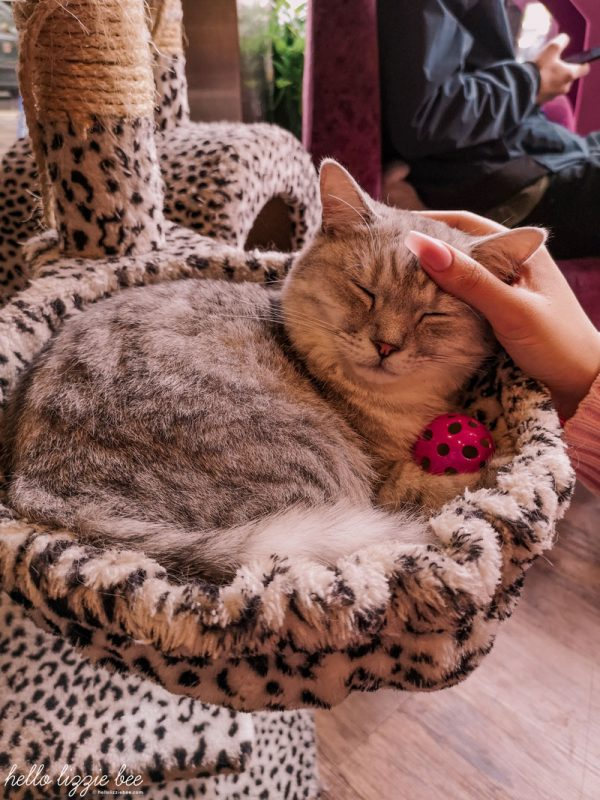 Cat cafe in Nottingham