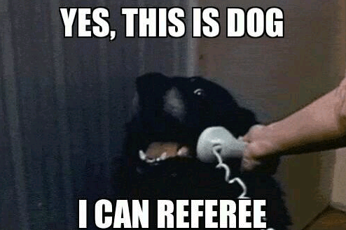 Yes, Dog can referee!
