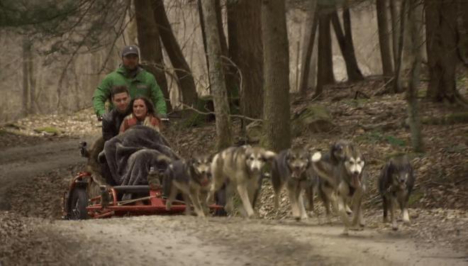 wolves-luke-jojo