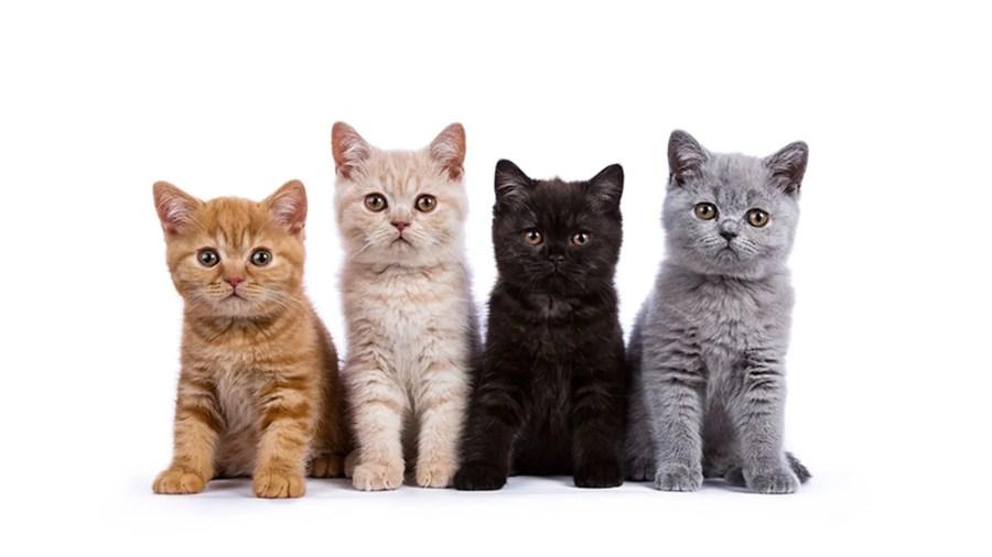 paul-and-joe-advent-calendar-cats