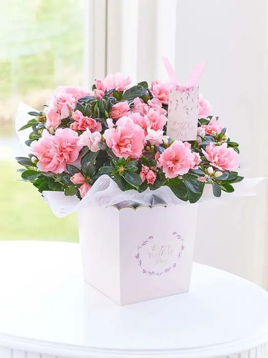The best Mother's Day Flower deals from M&S, Waitrose and more - Photo