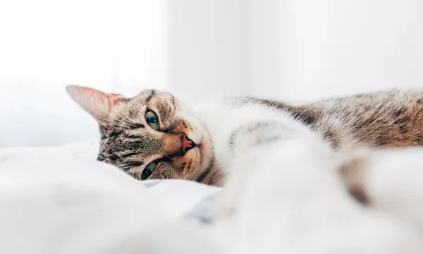 royal-canin-cat-diet