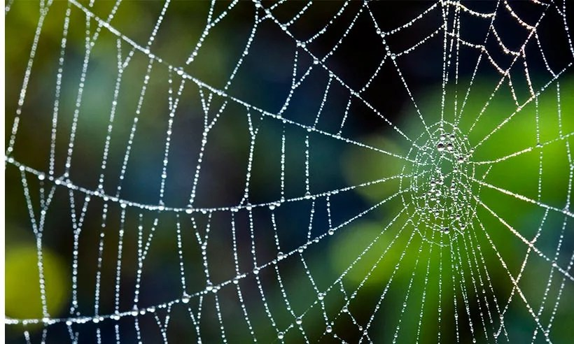5 Easy Ways To Keep Spiders Out Of Your Home