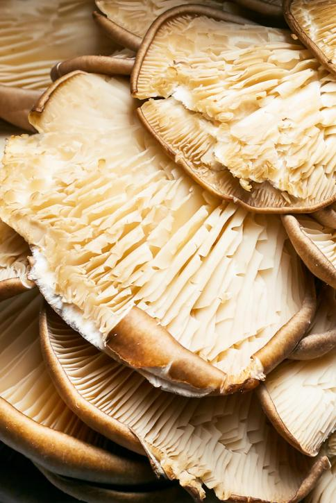 Sichuan Beer Braised Duck w/Mushrooms + Daikon | Hello My Dumpling