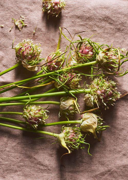 Bucatini Pasta w/Squash Blossoms, Summer Zucchini, Garlic Flowers | Jenny Huang