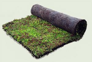 tapis pre cultive pour toiture id mat sedum