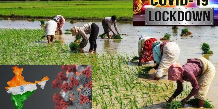 कोरोना, खेती, अन्नदाता, Farmers , Experience, Agriculture, Corona,
