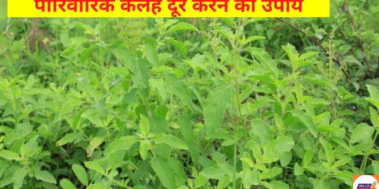 Money Problems , Money Problems ,How to earn Money, Best Family , How to solve family Problem, Tulsi,