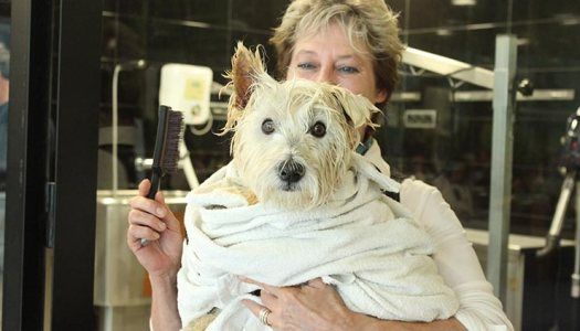 Mi perro también va a la peluquería