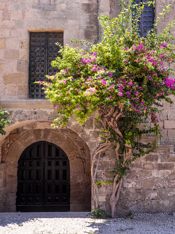 Bougainvillea in Old town Rhodes | Hello Victoria