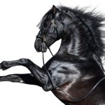 13 Breeds Where You Can Find All Black Horses Helpful Horse Hints