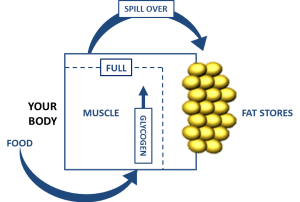 how to use carbohydrates to burn fat - fat spill over