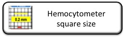 hemocytometer square size