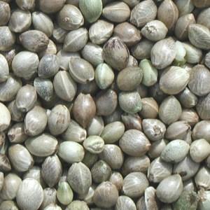 Hemp Seeds for health not a high