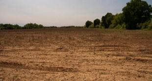Empty hemp field