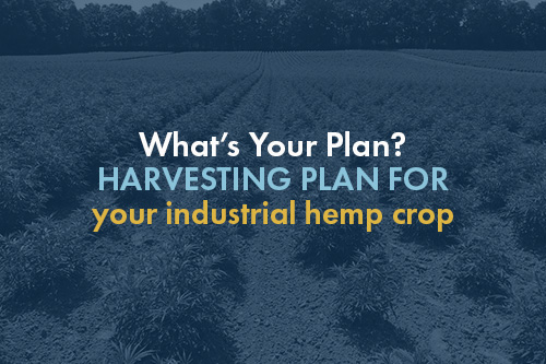 What's Your Plan? Harvesting Your Industrial Hemp Crop