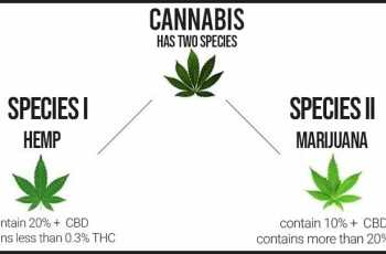Difference between cannabis, hemp, and marijuana