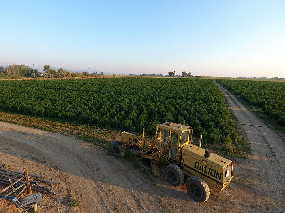 tractor on hemp farm