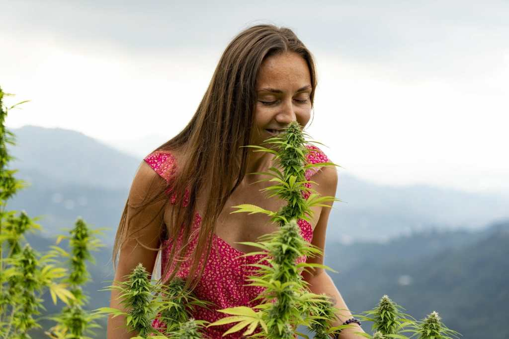 woman smelling cannabis plant