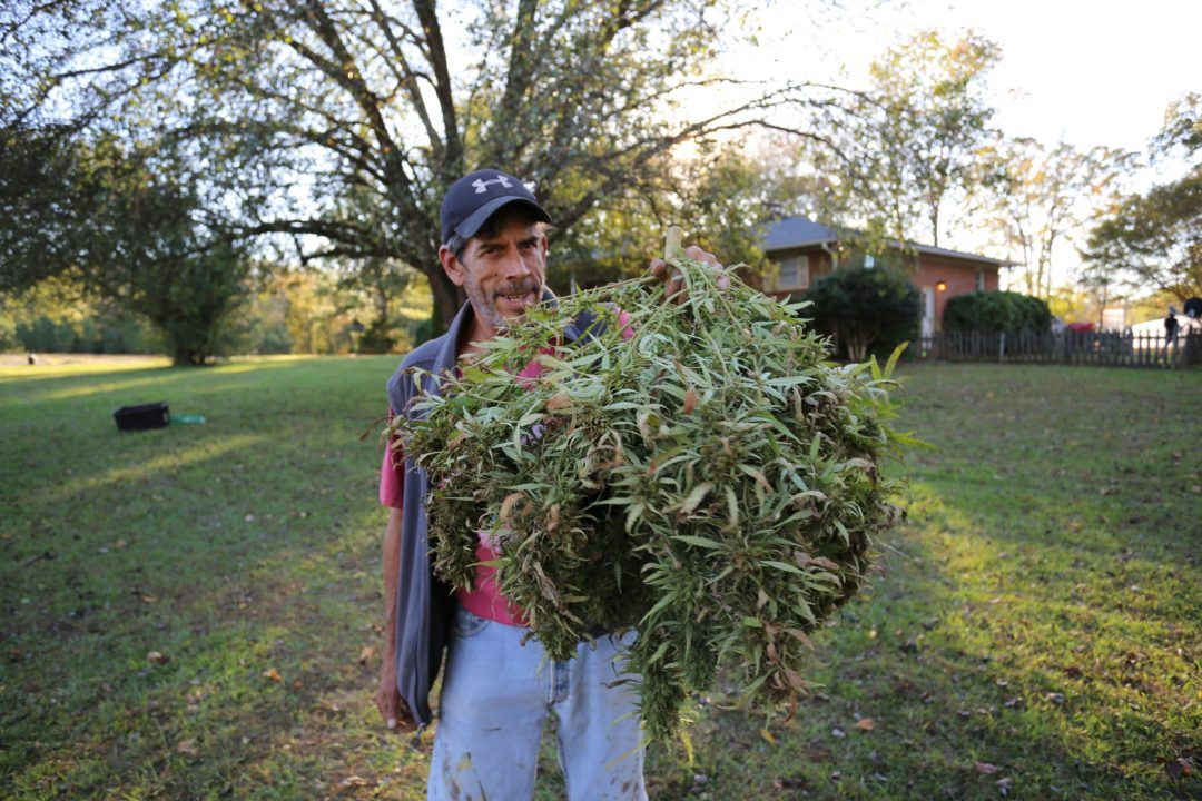 Mikey P proudly displaying a beautiful 5 pound plant.