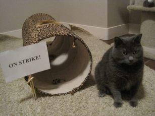 cat-on-strike