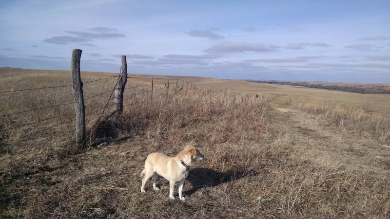 Exploring Tallgrass Prairie on the almost two mile Southwind Nature Trail.