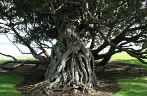Roots fallen tree