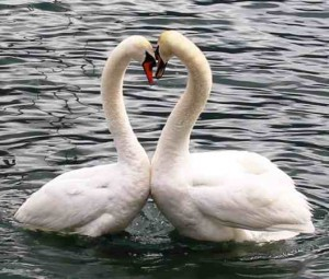Solve Relationship Problems - Two Swans