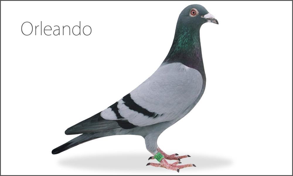 Orleando